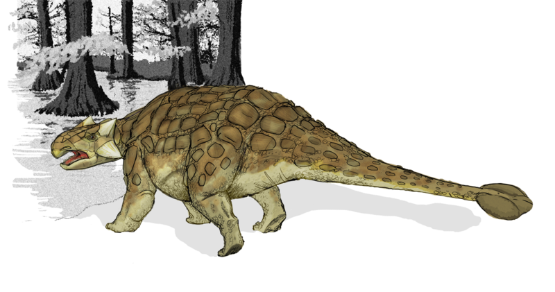 Possible appearance of an Ankylosaurus. Image credits: Mariana Ruiz Villarreal (LadyofHats).
