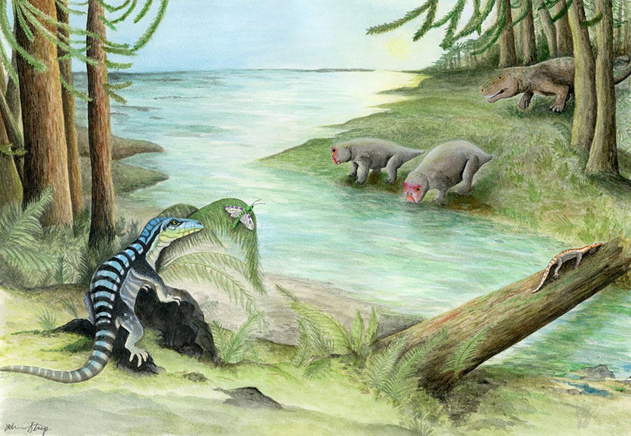 Along the banks of a river, three archosaur inhabitants of the dense Voltzia conifer forest cross paths: Antarctanax shackletoni sneaks up on an early titanopetran insect, Prolacerta broomi lazes on a log, and an enigmatic large archosaur pursues two unsuspecting dicynodonts, Lystrosaurus maccaigi. Image credit: Adrienne Stroup, Field Museum.