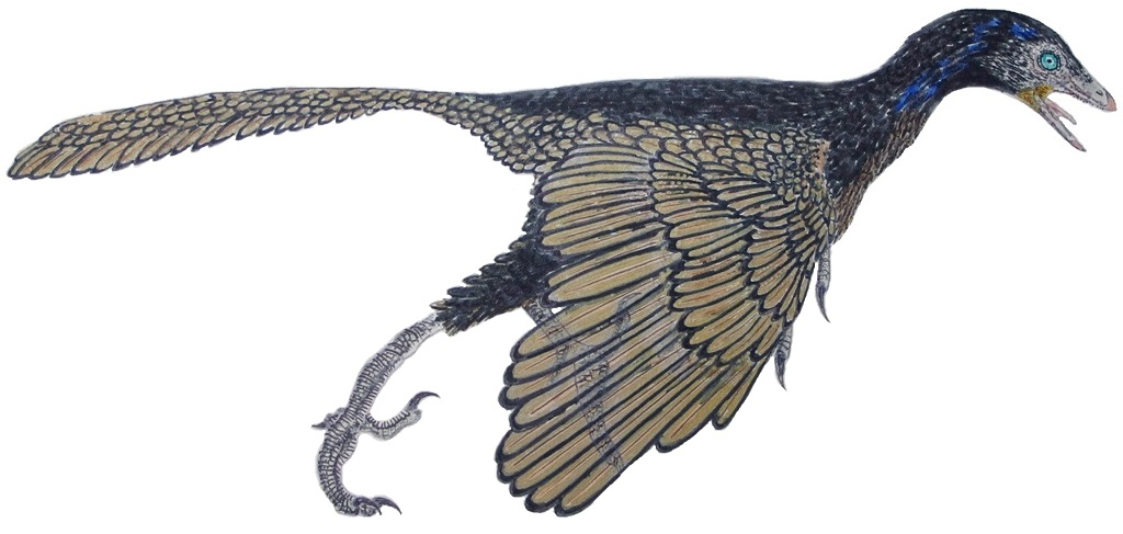 Archaeopteryx is regarded as one of the most important fossils ever discovered. Here, a representation of what it may have looked like. Image credits: Pedro José Salas Fontelles.