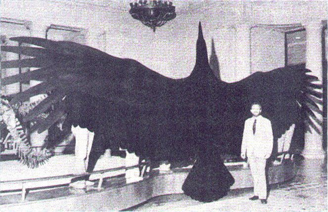 Argentavis could grow to be 24 feet wingtip to wingtip, which is twice the size of the Andean condor — one of the largest birds in the world today. (Photo: Wangyonglee/Wikimedia Commons)