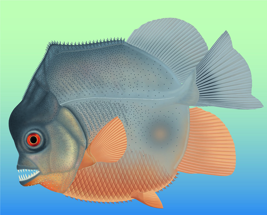 Artist's impression of Piranhamesodon pinnatomus. (Image: The Jura-Museum, Eischstatt, Germany)