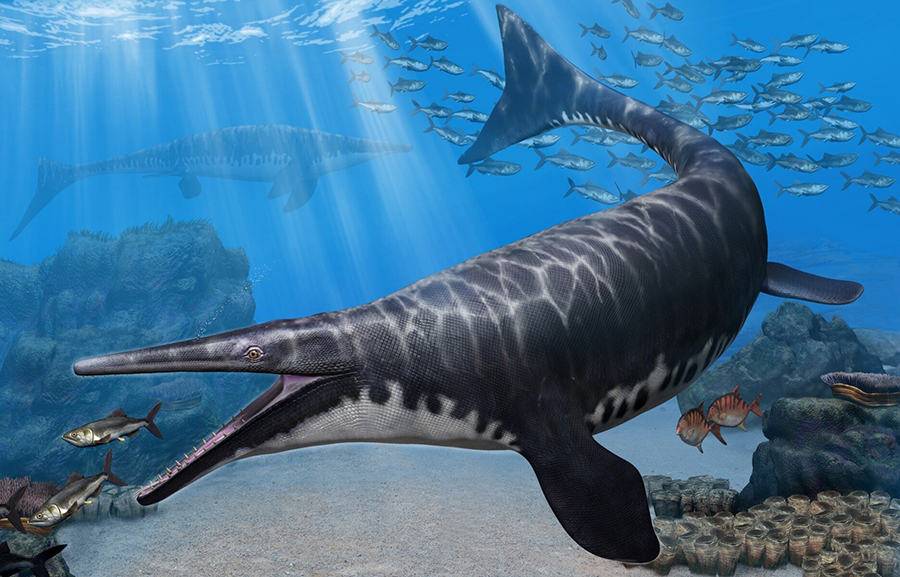 Artist's rendering of Gavialimimus almaghribensis, a newly discovered species of mosasaur that ruled the seas of what is now Morocco some 72 to 66 million years ago. Credit: Tatsuya Shinmura