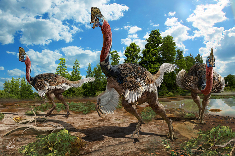 Artistic reconstruction of Corythoraptor jacobsi. (Image: Zhao Chuang)