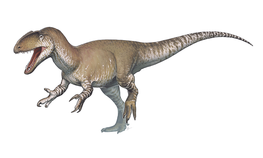 Artistic reconstruction of Neovenator salerii. Author: Fred Wierum