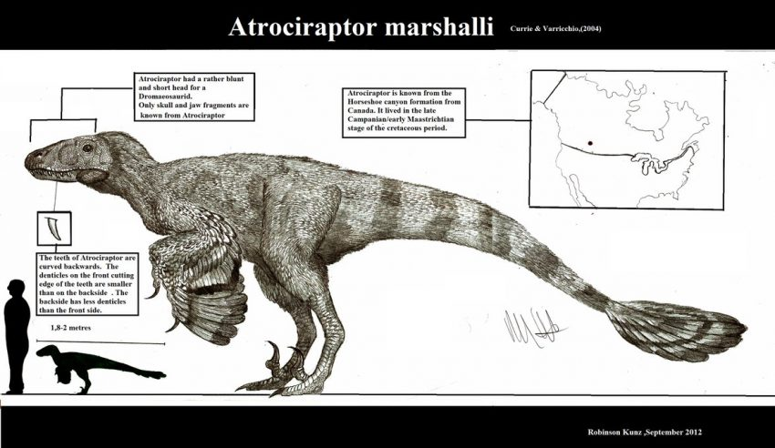 Atrociraptor marshalli by Teratophoneus on Deviantart