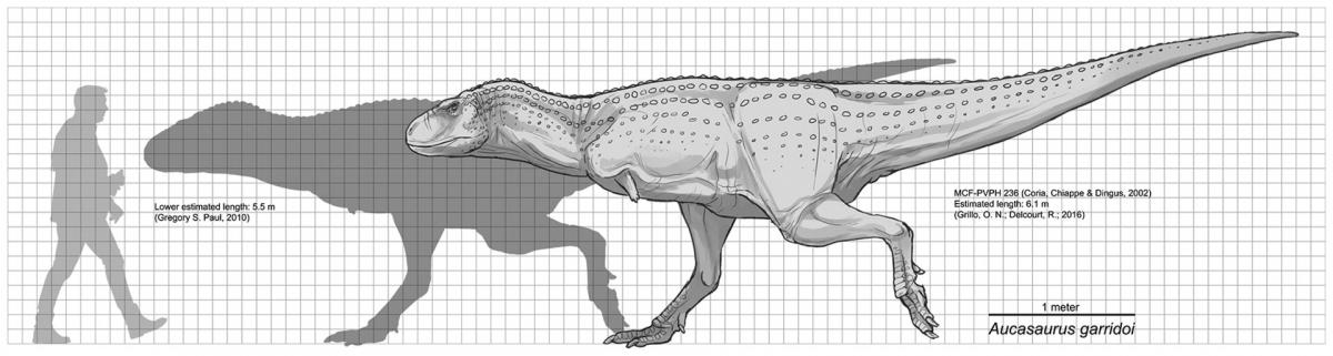 Aucasaurus garridoi scale diagram
