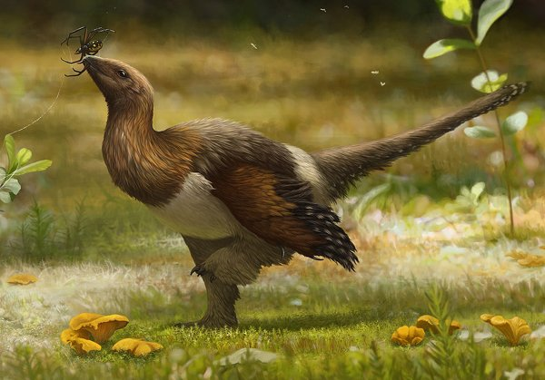 Mesozoic maniraptoran dinosaurs that possess all kinds of bird-like and not-so-bird-like combinations of anatomical characters are published all the time. This reconstruction, by Emily Willoughby, depicts Serikornis from the Upper Jurassic of China. According to its describers, it is not a bird. Credit: Emily Willoughby Wikimedia (CC BY-SA 4.0)
