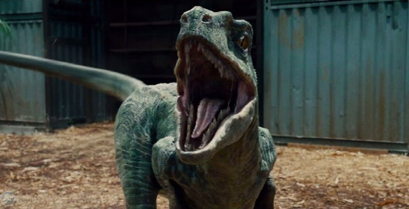 Blue-the-Velociraptor-in-Jurassic-World