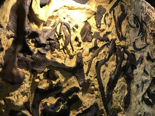 """Bob the Blob"" is a mass of intertwined dinosaurs on display at the Two Medicine Dinosaur Center in Bynum. (Photo: TRIBUNE PHOTO/KRISTEN INBODY)"