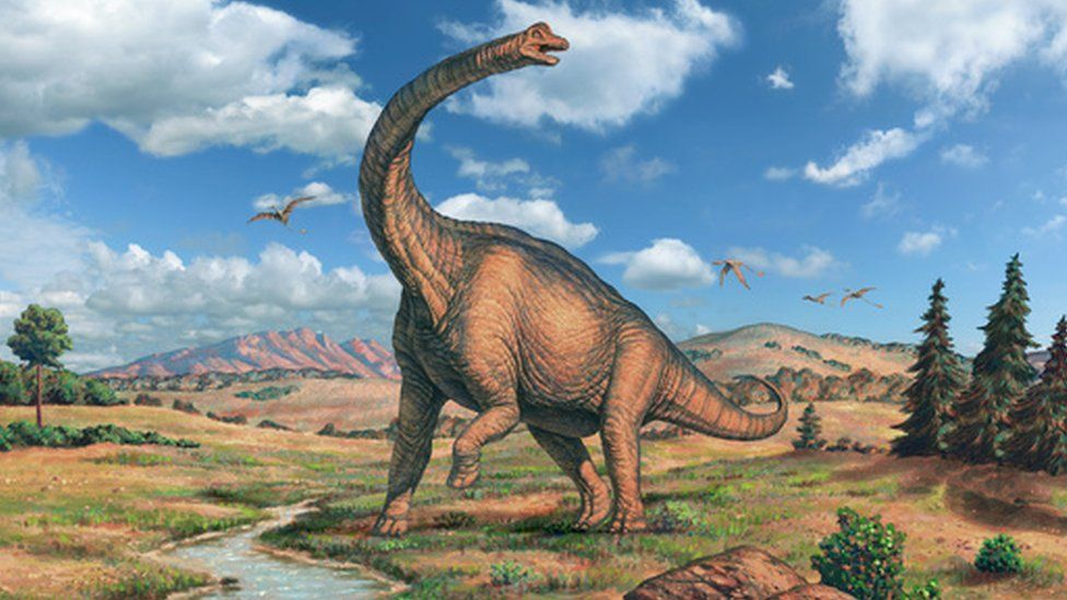 Brachiosaurus came later, and was even bigger. Image copyright SPL