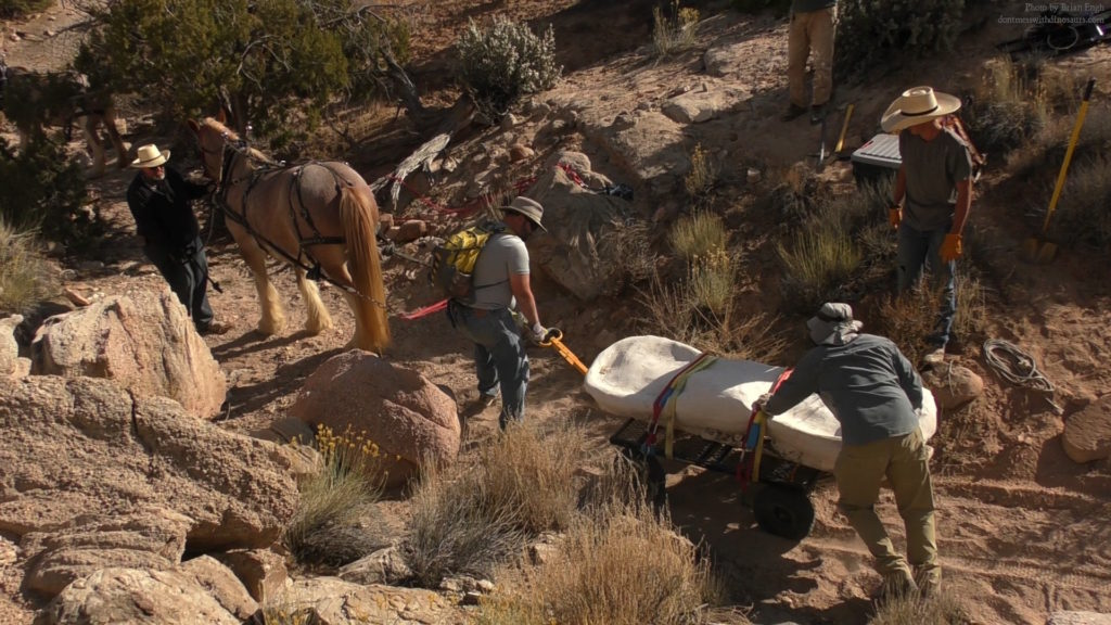 Clydesdale horses were used to help transport the recovered Brachiosaurus bone from the rugged area where it was discovered by paleoartist Brian Engh, Southern Utah, October 2019 | Photo by Brian Engh, courtesy of Utah State Parks, St. George News