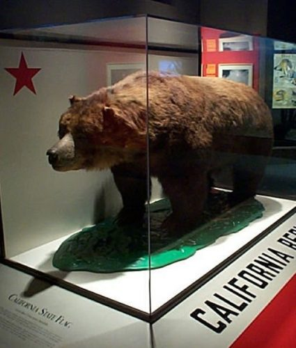 California Golden Bear