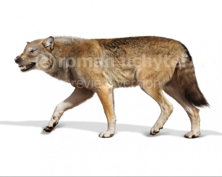 Dire wolf (Canis dirus Leidy, 1858)