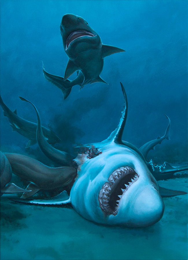 Carcharocles angustidens being feasted upon by several sixgill sharks. Image credit: Museums Victoria.