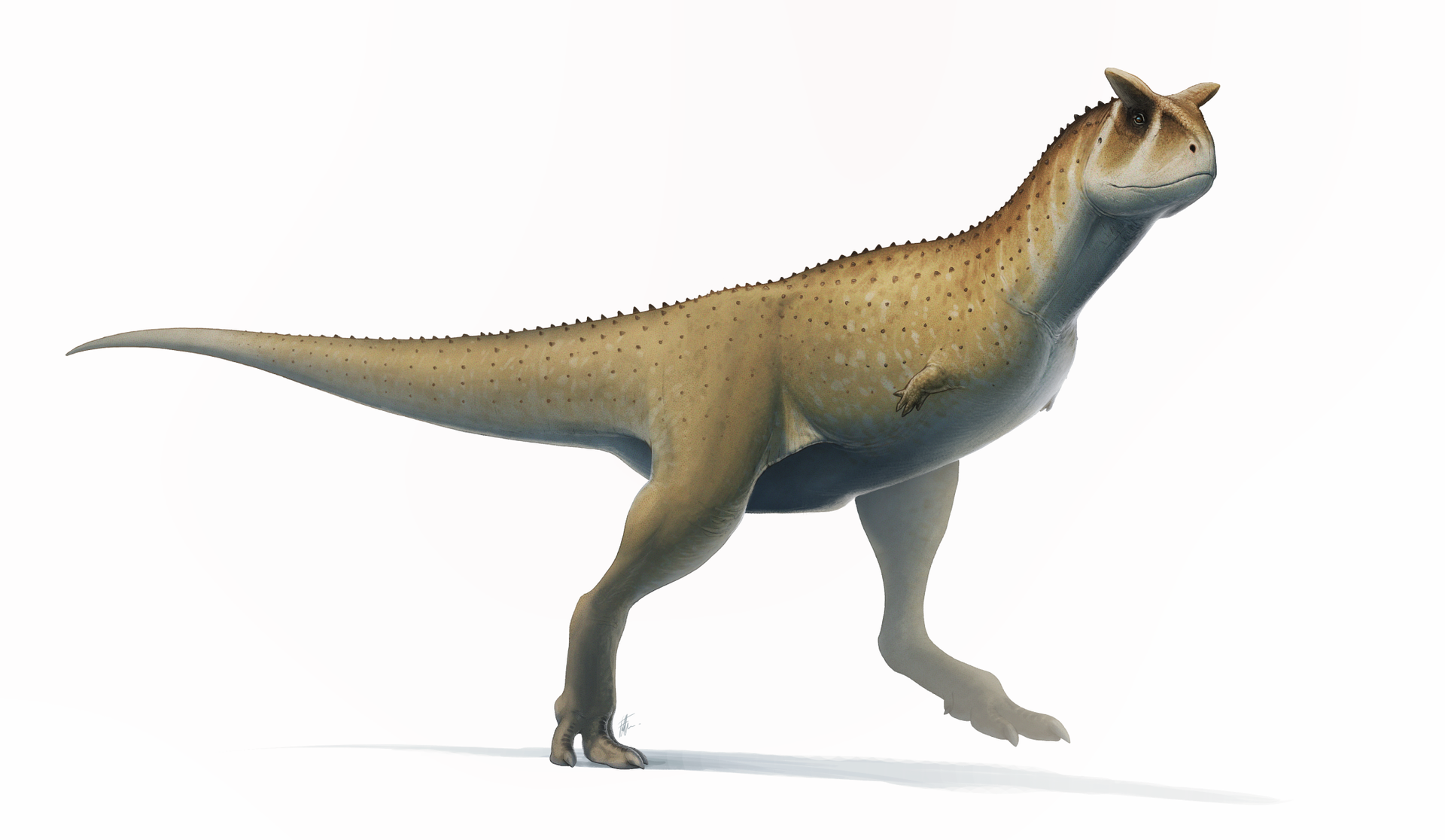 Illustration of Carnotaurus by Fred Wierum