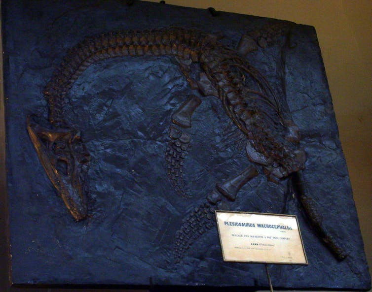 Cast of Plesiosaurus macrocephalus found by Mary Anning in 1830. Muséum national d'histoire naturelle, Paris/wikipedia, CC BY-SA