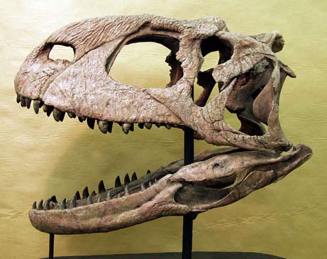 Cast of Rajasaurus skull (Wikimedia Commons)