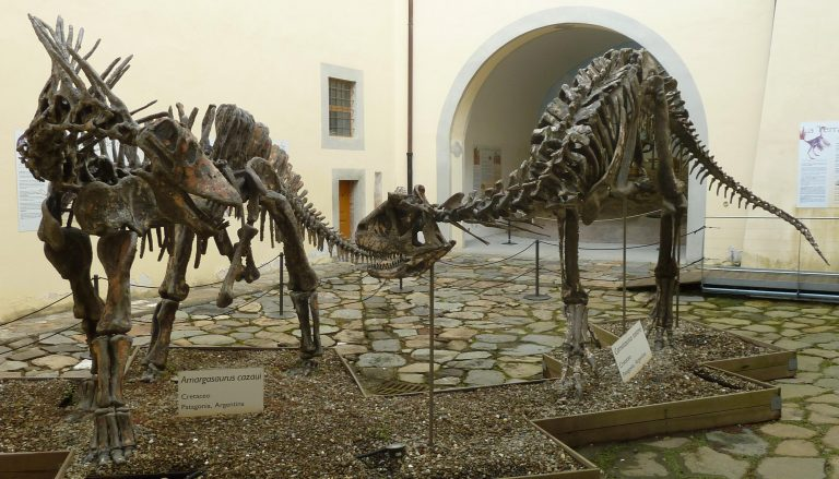Casts of Amargasaurus and Carnotaurus, both discovered by the same 1984 expedition in Argentina, Museo storia naturale di Pisa