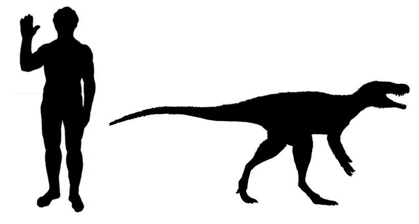 Comparison of the size of Chindesaurus and a human