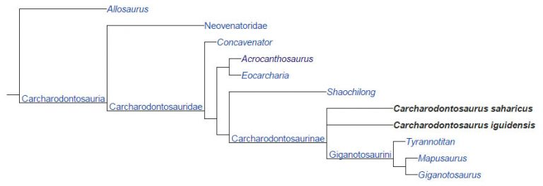 Cladogram after Apesteguía et al., 2016
