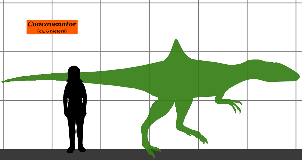 Size compared to a human.