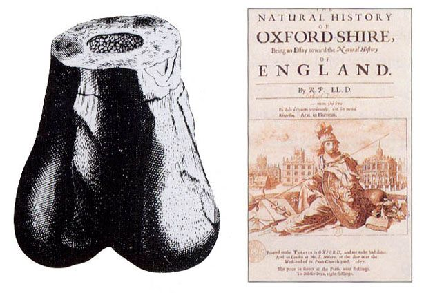 Cover of Robert Plot's Natural History of Oxfordshire, 1677 (right), and illustration of a fossilized lower extremity of a Megalosaurus femur (left) taken from that book. The bone was described by Richard Brookes in 1763 and jokingly named Scrotum humanum. Author: Robert Plot, Michael Burghers