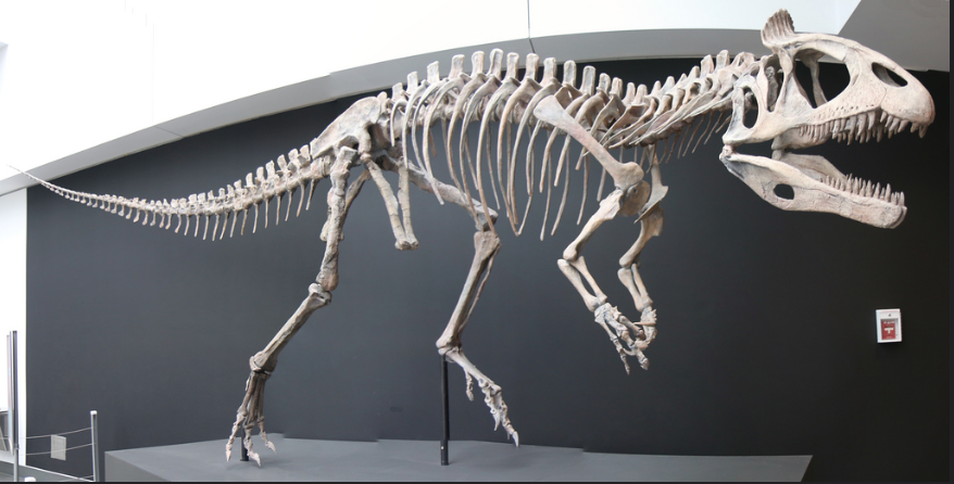 Reconstructed holotype skeleton