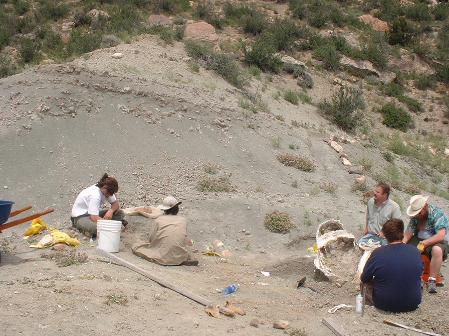 Researchers in Wyoming were excavating a giant dinosaur known as supersaurus when they accidentally discovered a small, winged dinosaur now nicknamed Lori. Lori is helping rewrite the evolutionary relationship dinosaurs and modern birds. PHOTO BY WYOMING DINOSAUR CENTER