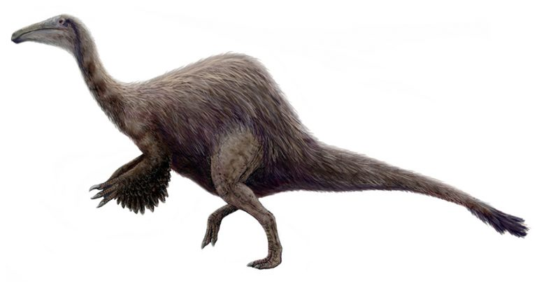 Deinocheirus mirificus restoration. Based on the skeletal diagram and description in Lee et al. (2014).