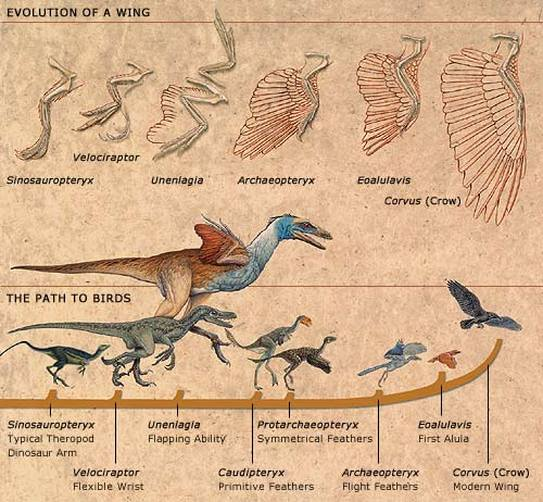 Dinosaur-Killing Asteroid Accelerated Bird Evolution