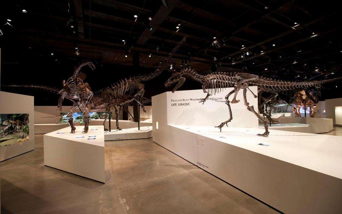 The Morian Hall of Paleontology at the Houston Museum of Natural Science.  Courtesy of Houston Museum of Natural Science