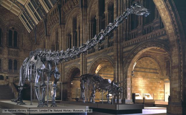 Diplodocus (left) lived during the Upper Jurassic period 159 to 144 million years ago. Triceratops lived during the Upper Cretaceous period 98-65 million years ago.