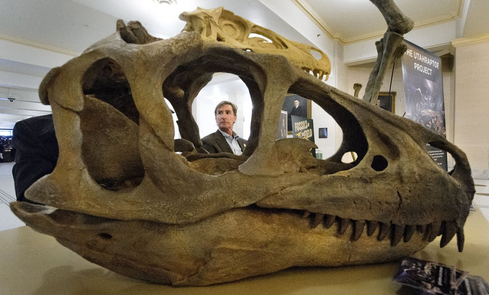 (Steve Griffin | The Salt Lake Tribune) Utah State assistant state paleontologist, Don DeBlieux, is framed in the skull of a Utahraptor on dislapy at the Utah State capitol in Salt Lake City Monday February 12, 2018. Deblieux and Utah State Paleontologist James Kirkland were at the capitol in support of S.B. 43 which is seeking to make the Utahraptor the State dinosaur.