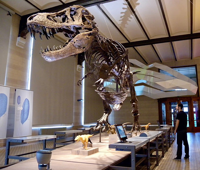 Dr Nicolás Campione standing beside a cast of Tyrannosaurus rex at the Royal Belgian Institute of Natural Sciences in 2009. Credit: David Evans