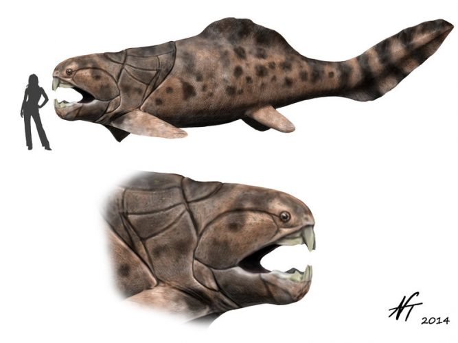 Dunkleosteus by NTamura on Deviantart