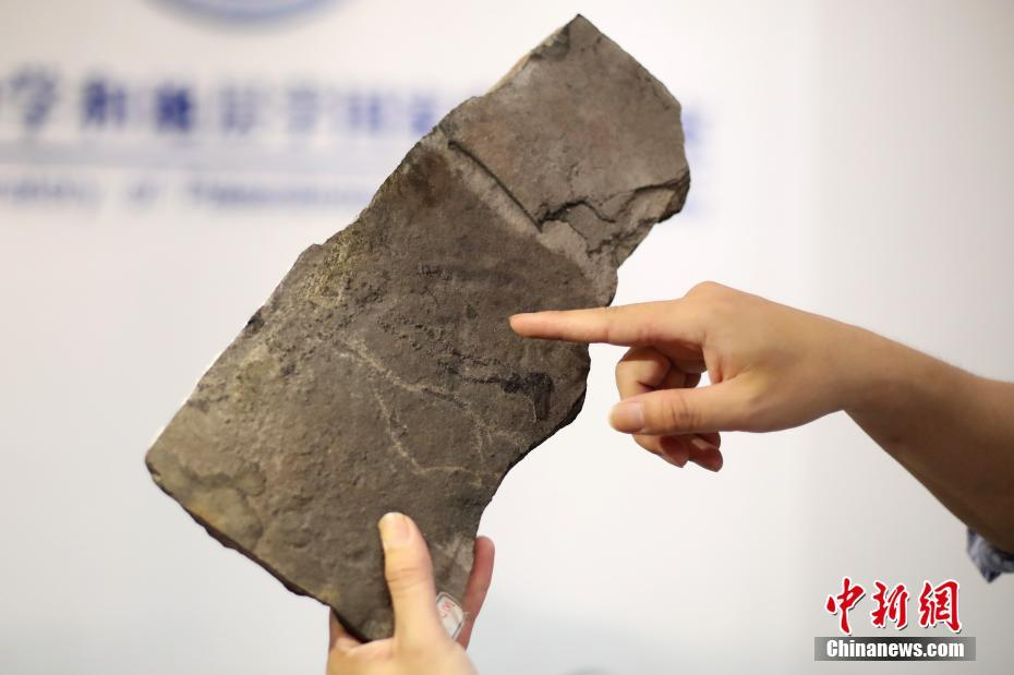Earliest Animal Footprints Found in China