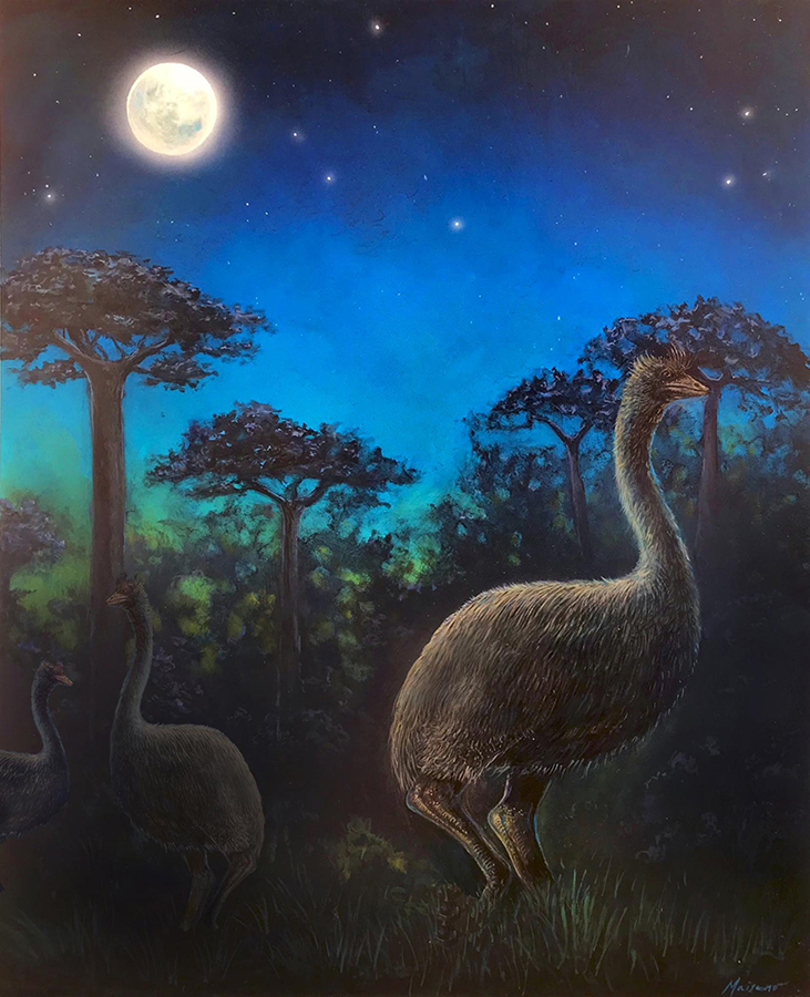 An artist's interpretation of elephant birds foraging in the ancient forests of Madagascar at night. Image credit: John Maisano / University of Texas at Austin Jackson School of Geosciences.