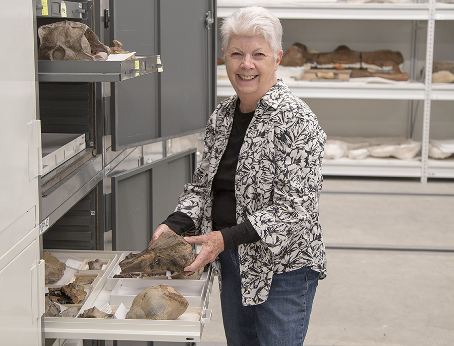 Elizabeth Nesbitt with some of the whale fossils in the Burke Museum's collection.University of Washington
