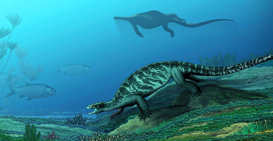 An artist's depiction of Eorhynchochelys sinensis as it would have appeared in life 228 million years ago in China. Image credit: Institute of Vertebrate Paleontology and Paleoanthropology, Chinese Academy of Sciences.