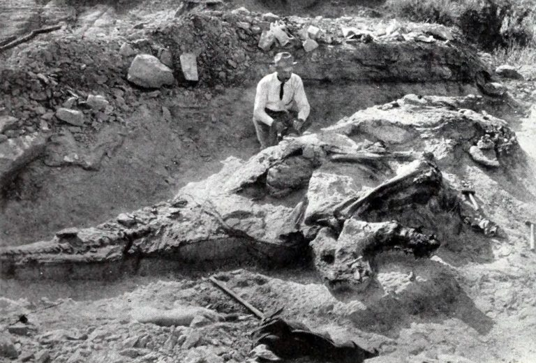 Excavation of the holotype specimen of Corythosaurus casuarius by the Red Deer River.