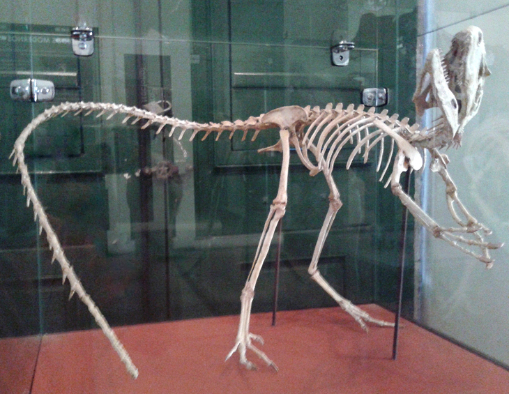 FEATURED FOSSILS A reconstructed Santanaraptor skeleton once stood in the galleries of the National Museum. The fossils it was based on may or may not have survived the recent fire.