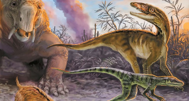 FOSSIL BED Early dinosaur ancestors like the pair on the right were thought to evolve around 10 million years before dinosaurs. But new dating of fossil layers in Argentina cuts that time in half, to about 5 million years. IMAGE COURTESY OF VICTOR LESHYK