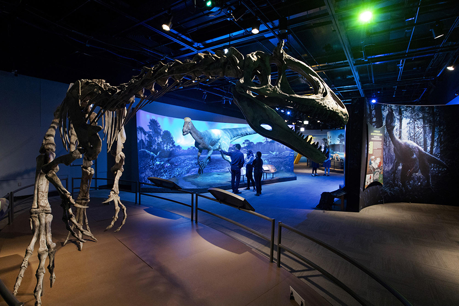 The Field Museum shows off new discoveries from a surprising place in its new exhibition, 'Antarctic Dinosaurs.' The exhibit opens June 15, 2018. (Chris Walker / Chicago Tribune)
