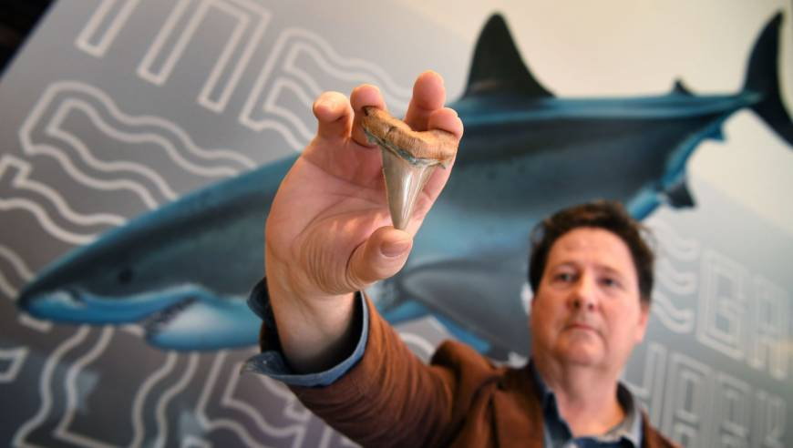 Fossil enthusiast Philip Mullaly holds a tooth from an extinct great jagged narrow-toothed shark at the Melbourne Museum on Thursday. | AFP-JIJI