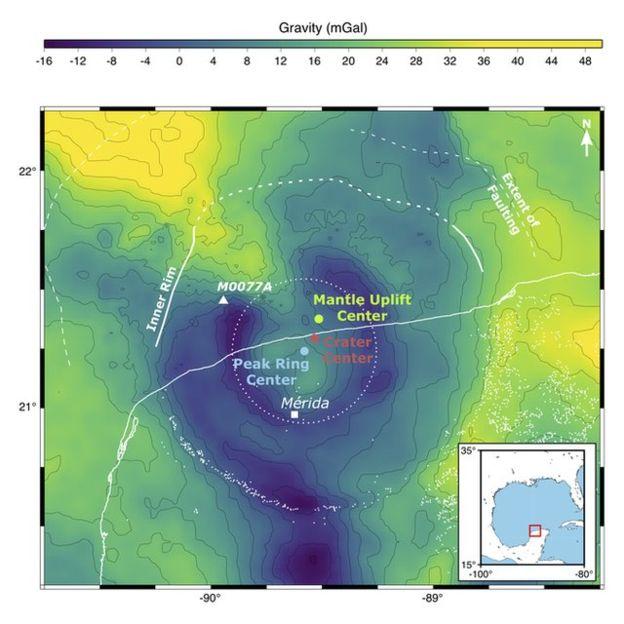 G.COLLINS Image caption Gravity measurements trace the central features of the Chicxulub Crater