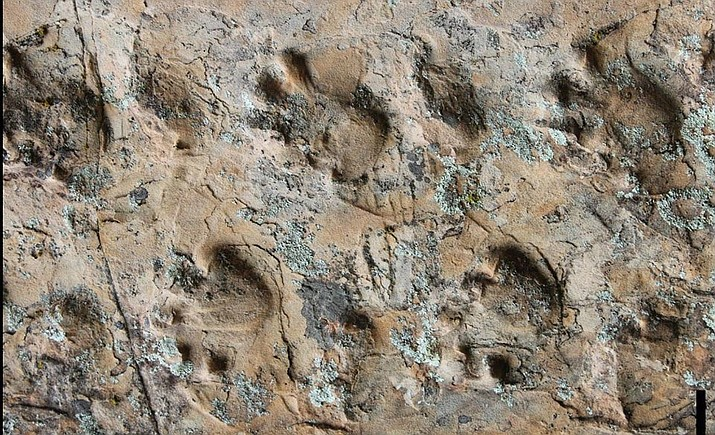 Close-up view of the Ichniotherium trackway from Grand Canyon National Park. (Photo courtesy of Heitor Francischini via NPS)