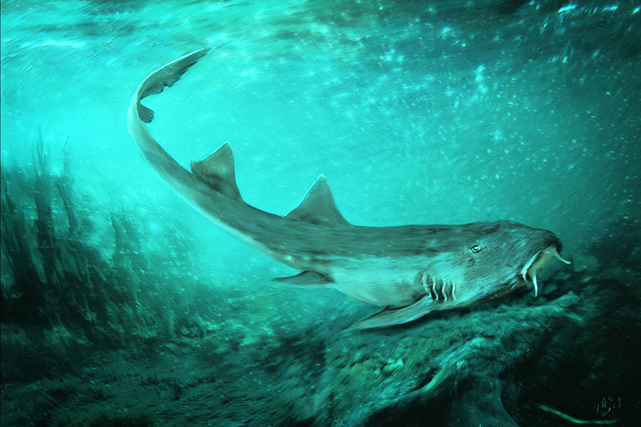 An illustration showing what Galagadon nordquistae would have looked like in life, swimming along the river floor. Image credit: Velizar Simeonovski, Field Museum.