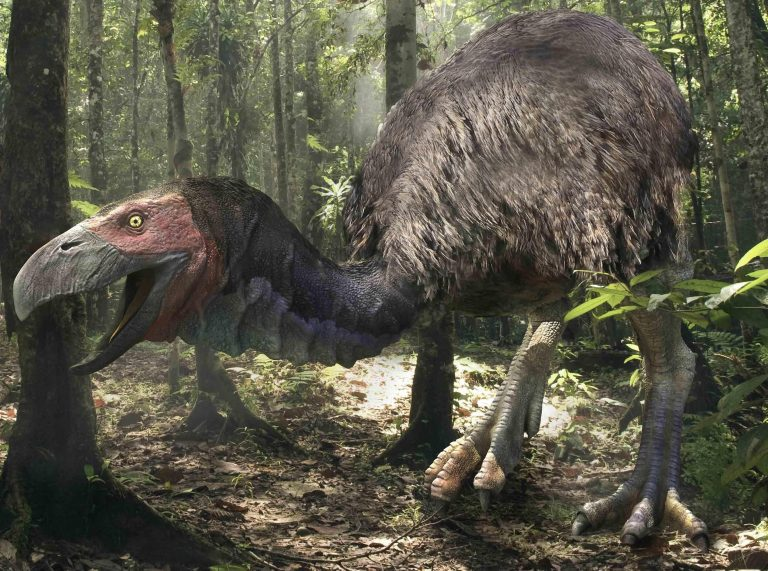 Gastornis is an extinct genus of large flightless birds that lived during the late Paleocene and Eocene epochs of the Cenozoic era. Initially thought to be a predator, new theories suggest this large bird may have been a herbivore. Paleoart by Jacek Major