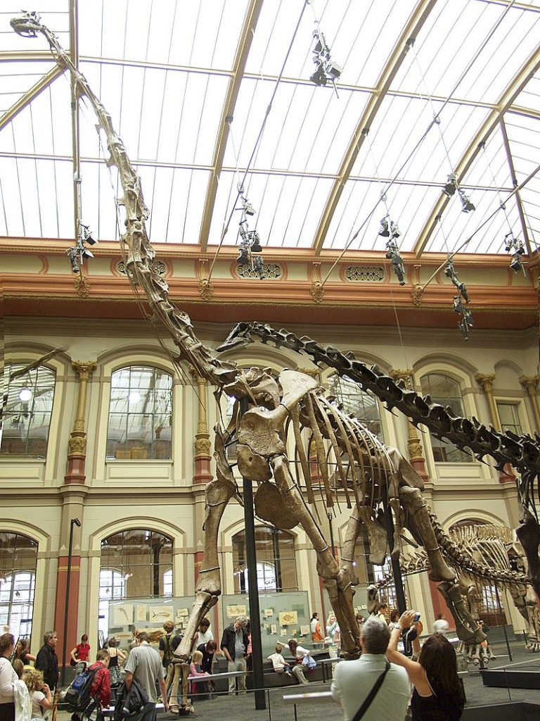 Giraffatitan skeleton in Berlin, formerly referred to as Brachiosaurus. © Raimond Spekking / CC BY-SA 4.0 (via Wikimedia Commons)