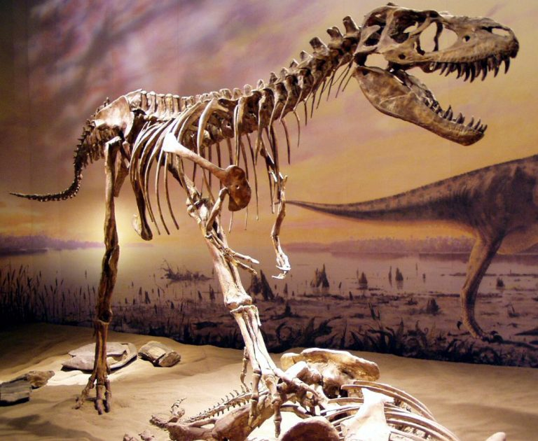 Gorgosaurus at the Royal Tyrrell Museum. Author: Sebastian Bergmann